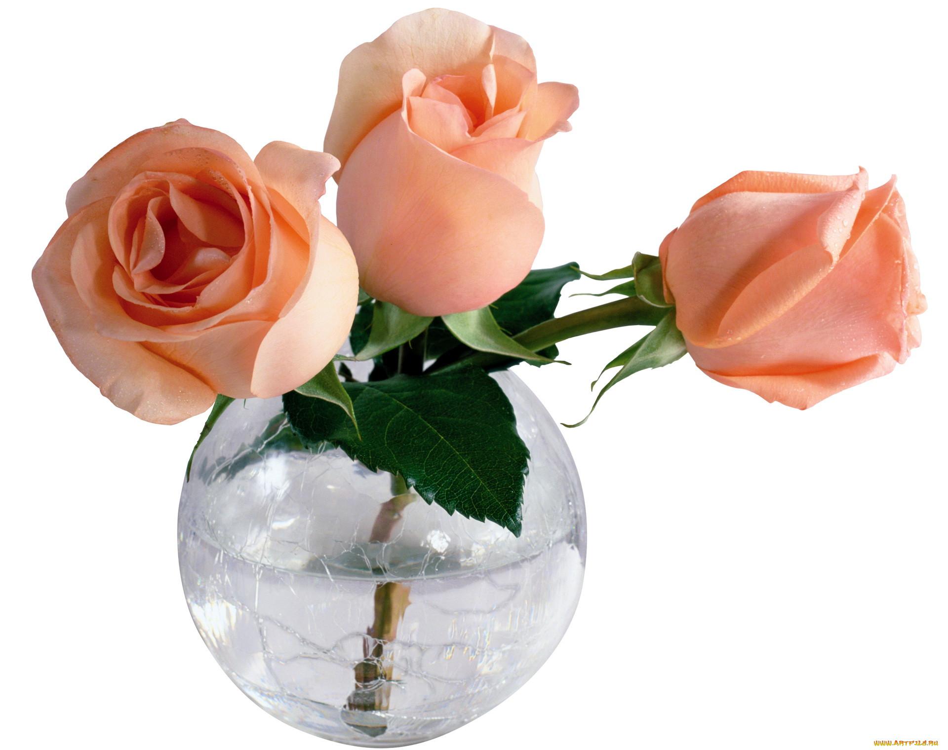Картинки цветы роза в вазе